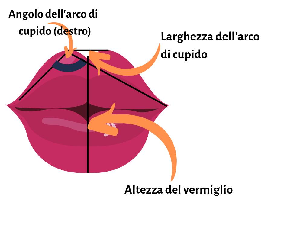 L'immagine rappresenta l'angolo dell'arco di cupido, la larghezza dell'angolo di cupido e l'altezza del vermiglio